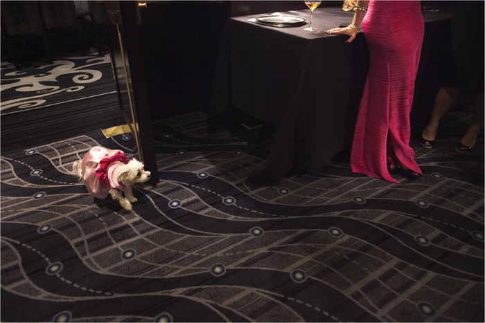 Lucky Diamond, a Maltese dog, is seen at her bridal shower in New York