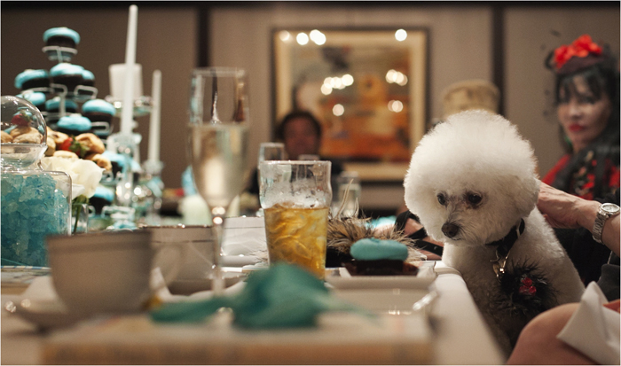 Zoe, the Bijon Frise of Harriette Rose Katz, attends the bridal shower of Lucky Diamond, a Maltese dog, in New York